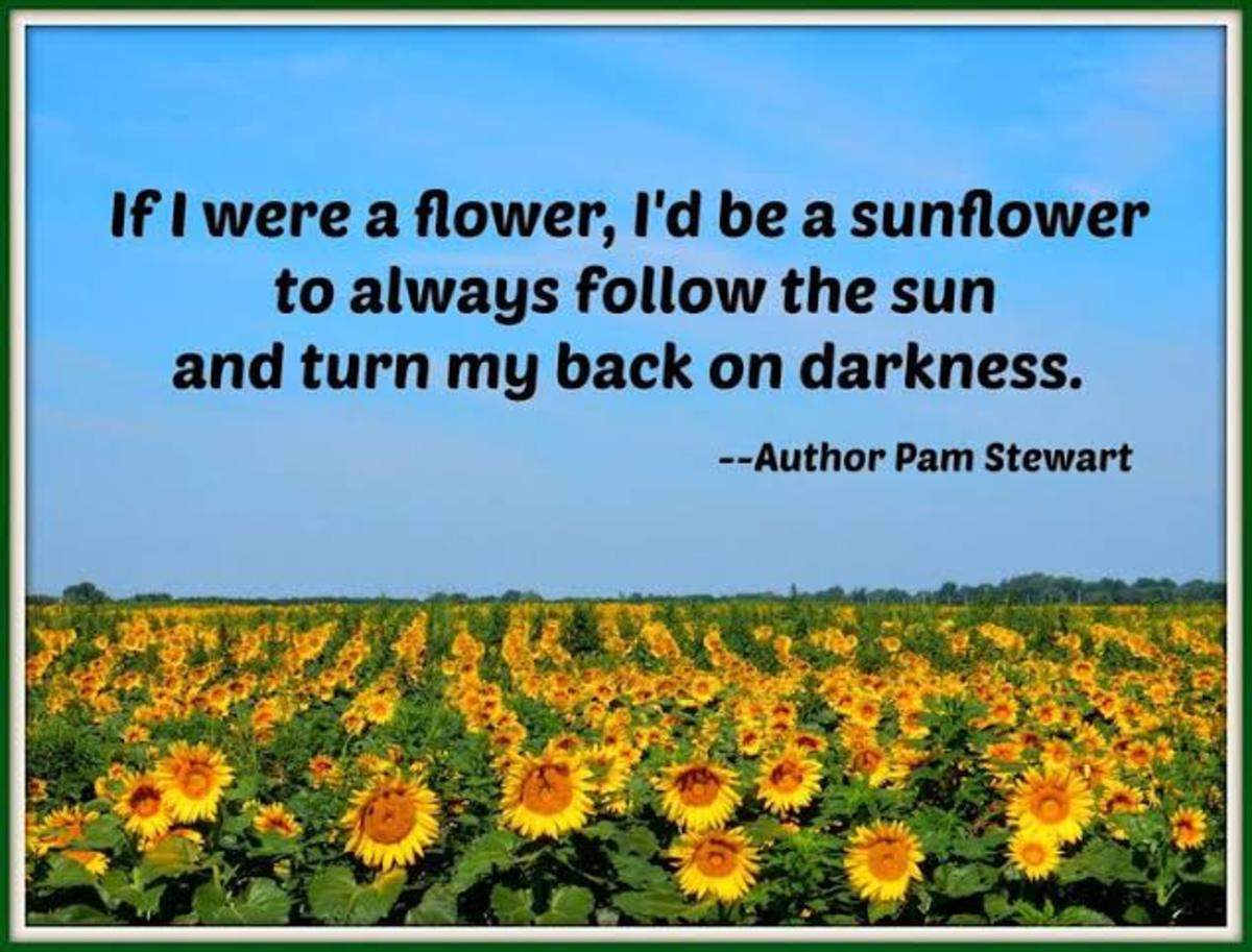 facts-about-sunflower