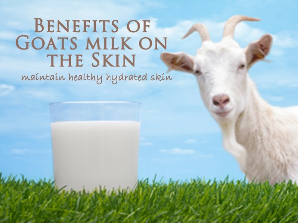 Benefits of Goat Milk - Calla Lily Cosmetics