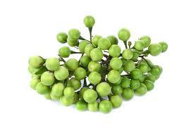 Solanum torvum – (Turkey Berry) – ENINE Hydroponic (Pvt) Ltd