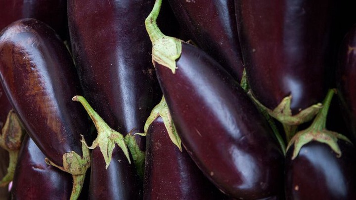 How to grow aubergines: how to grow eggplants from seed   Country