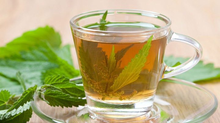 Relieve It With A Herb: Stinging Nettle Tea For Gout - Z Living