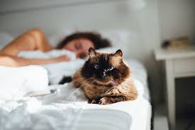 Our Spiritual Connection With Cats - PetHelpful
