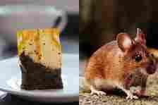 Teh celup dan tikus