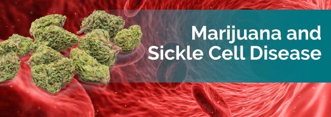 Marijuana For Sickle Cell Disease - Marijuana Doctors