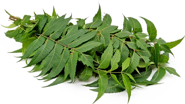 Neem Leaves Information and Facts
