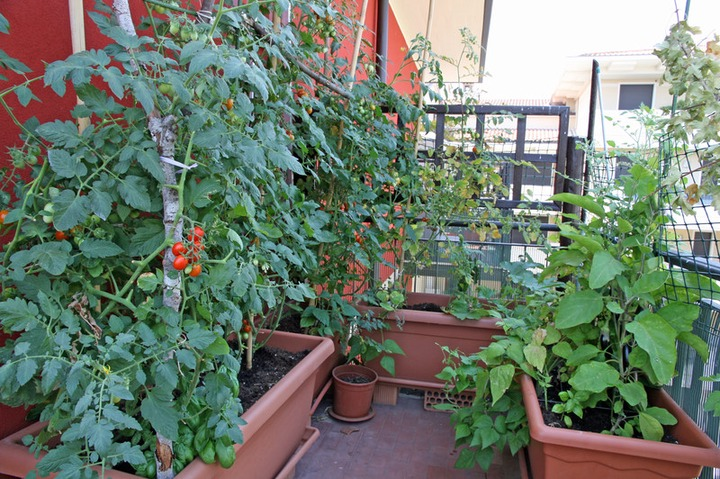 Crops for a Windy Balcony or Roof - Harvest to Table