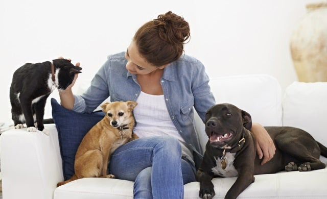 Business ideas: Professional pet sitting | Startups.co.uk