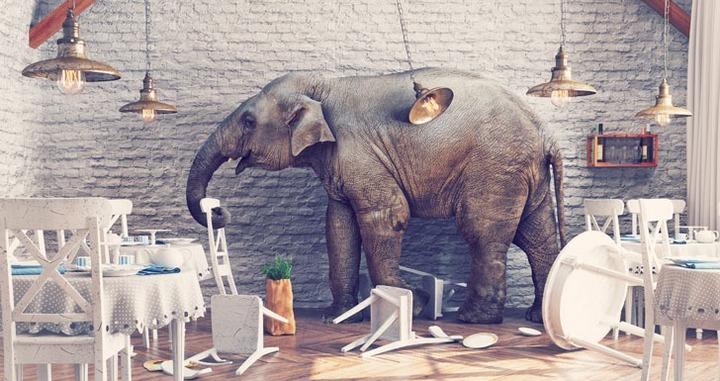 Clumsy elephant