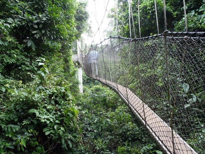 Kakum Canopy Walk - Central, Ghana   AllTrails