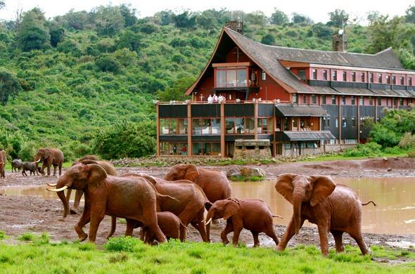 Aberdare National Park - Kenyan Safaris