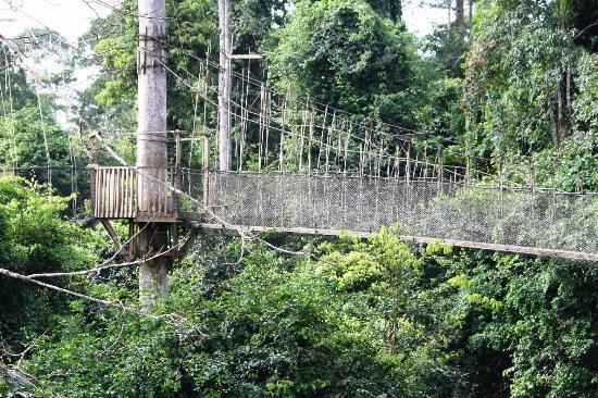 Canopy walk - Review of Kakum National Park, Cape Coast, Ghana - Tripadvisor